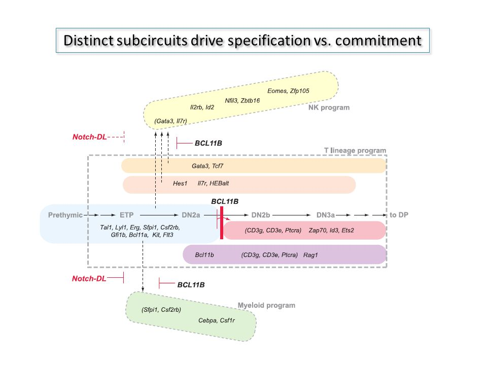 Distinct subcircuits drive specification vs. commitment