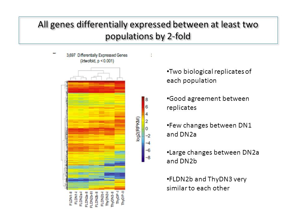 All genes differentially expressed between at least two populations by 2-fold Two biological replicates of each population Good agreement between replicates Few changes between DN1 and DN2a Large changes between DN2a and DN2b FLDN2b and ThyDN3 very similar to each other