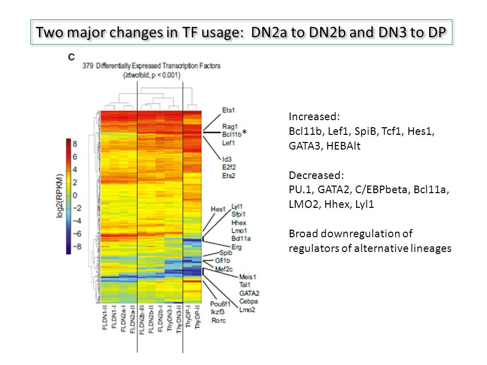 Two major changes in TF usage: DN2a to DN2b and DN3 to DP * Increased: Bcl11b, Lef1, SpiB, Tcf1, Hes1, GATA3, HEBAlt Decreased: PU.1, GATA2, C/EBPbeta, Bcl11a, LMO2, Hhex, Lyl1 Broad downregulation of regulators of alternative lineages