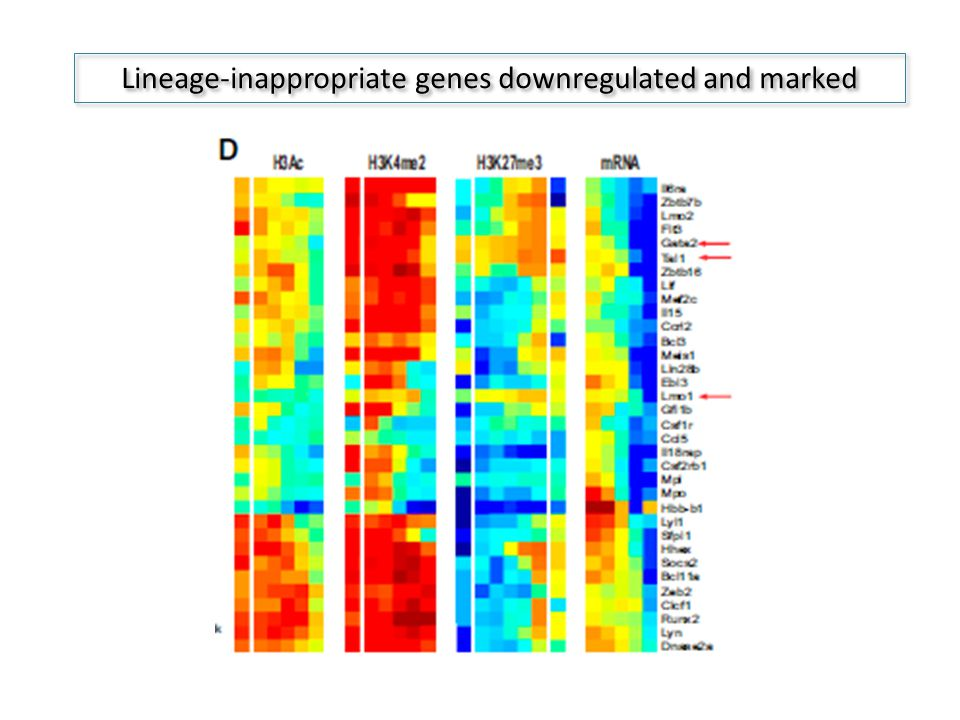 Lineage-inappropriate genes downregulated and marked