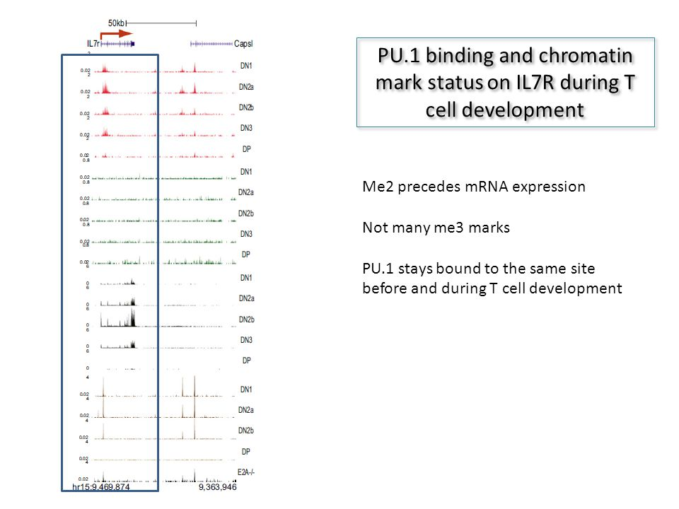 PU.1 binding and chromatin mark status on IL7R during T cell development Me2 precedes mRNA expression Not many me3 marks PU.1 stays bound to the same site before and during T cell development