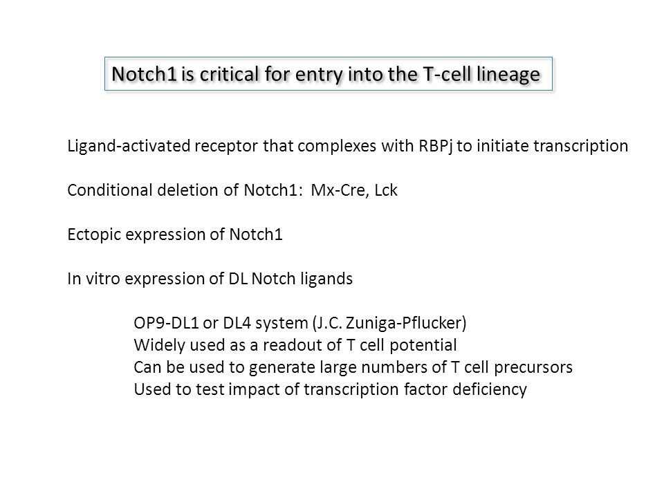 Notch1 is critical for entry into the T-cell lineage Ligand-activated receptor that complexes with RBPj to initiate transcription Conditional deletion of Notch1: Mx-Cre, Lck Ectopic expression of Notch1 In vitro expression of DL Notch ligands OP9-DL1 or DL4 system (J.C.
