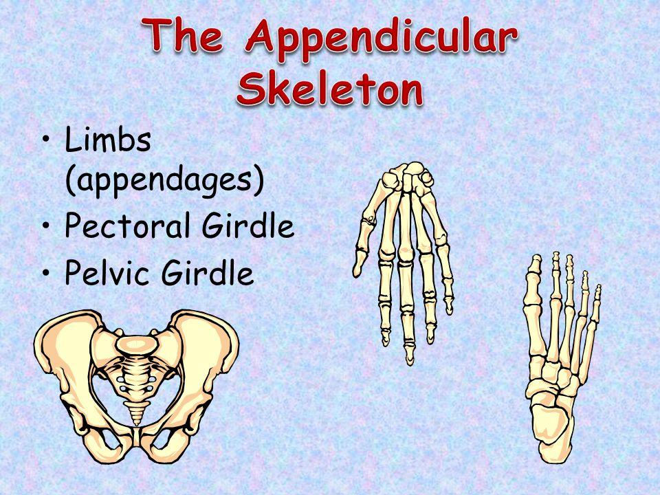 Limbs (appendages) Pectoral Girdle Pelvic Girdle