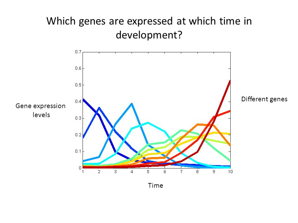 Time Which genes are expressed at which time in development Gene expression levels Different genes