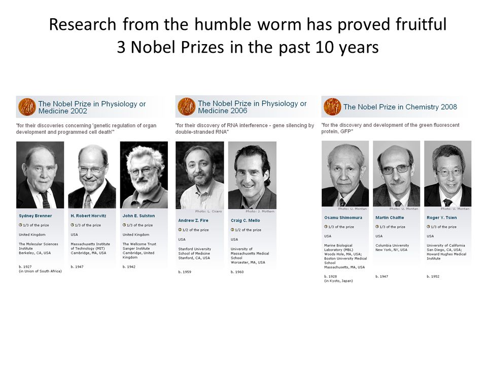 Research from the humble worm has proved fruitful 3 Nobel Prizes in the past 10 years