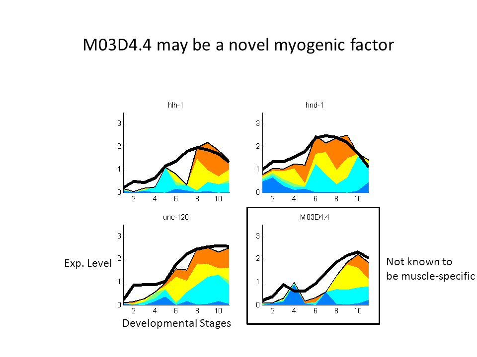 M03D4.4 may be a novel myogenic factor Developmental Stages Exp. Level Not known to be muscle-specific