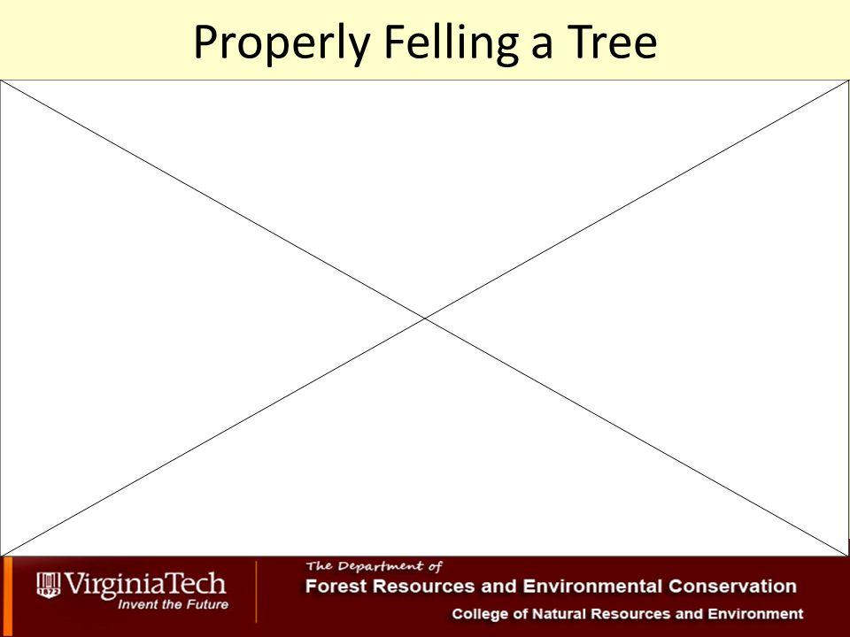 Properly Felling a Tree