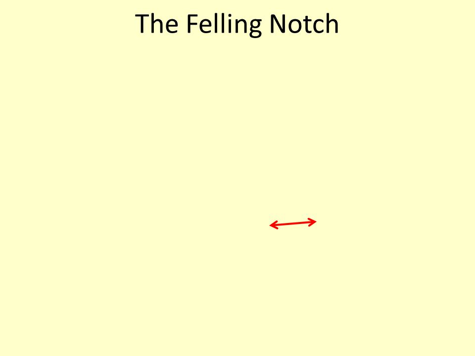 The Felling Notch