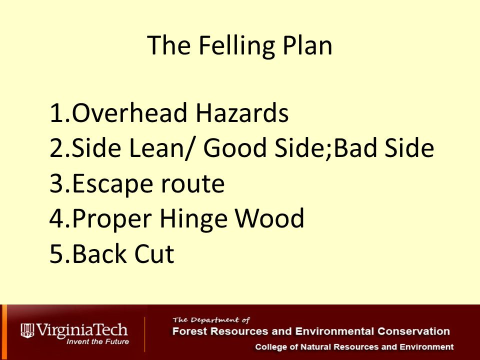 The Felling Plan 1.Overhead Hazards 2.Side Lean/ Good Side;Bad Side 3.Escape route 4.Proper Hinge Wood 5.Back Cut