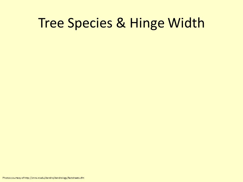 Tree Species & Hinge Width Photos courtesy of http://cnre.vt.edu/dendro/dendrology/factsheets.cfm