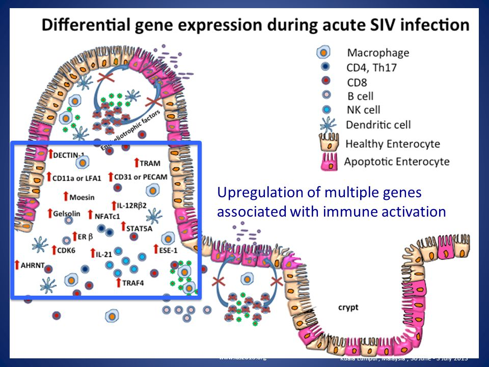 www.ias2013.org Kuala Lumpur, Malaysia, 30 June - 3 July 2013 Upregulation of multiple genes associated with immune activation