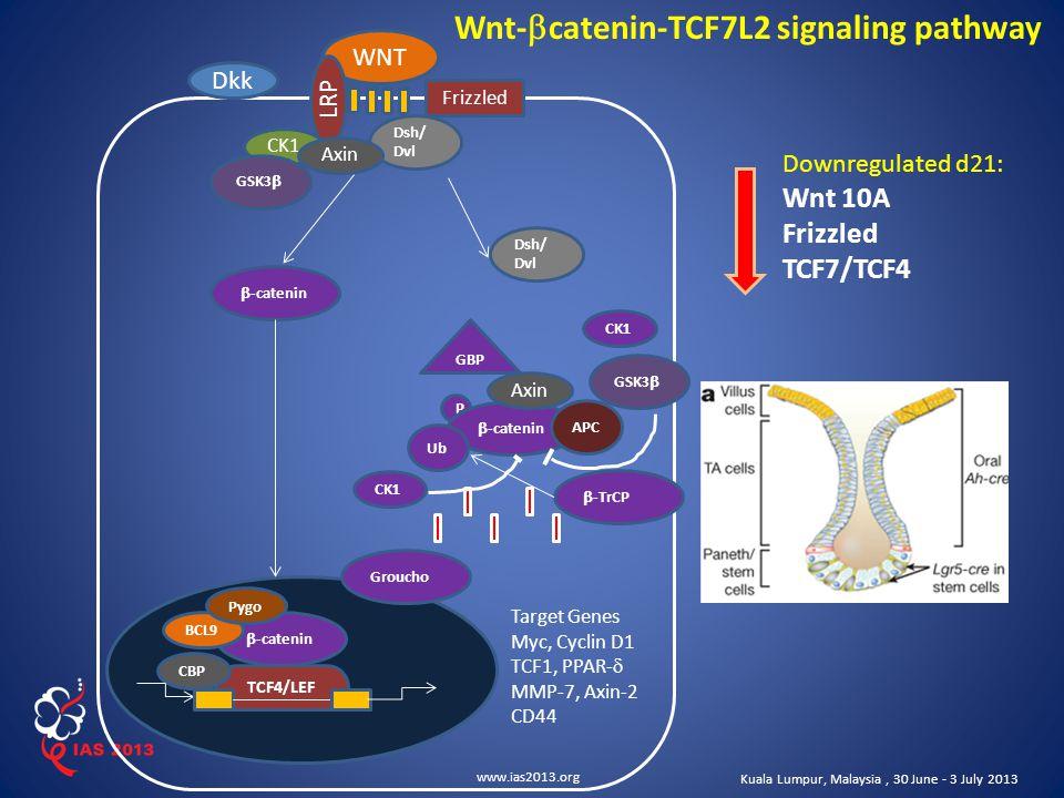 www.ias2013.org Kuala Lumpur, Malaysia, 30 June - 3 July 2013 WNT Dkk CK1 GSK3  Dsh/ Dvl CK1 GBP P CK1 LRP Axin  -catenin TCF4/LEF CBP  -catenin BCL9 Pygo GSK3  Dsh/ Dvl  -catenin APC Ub  -TrCP Target Genes Myc, Cyclin D1 TCF1, PPAR-  MMP-7, Axin-2 CD44 Axin Frizzled Wnt-  catenin-TCF7L2 signaling pathway Groucho Downregulated d21: Wnt 10A Frizzled TCF7/TCF4