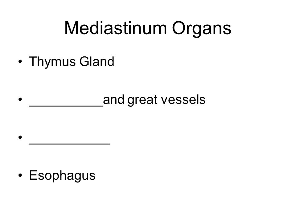 Mediastinum Organs Thymus Gland __________and great vessels ___________ Esophagus