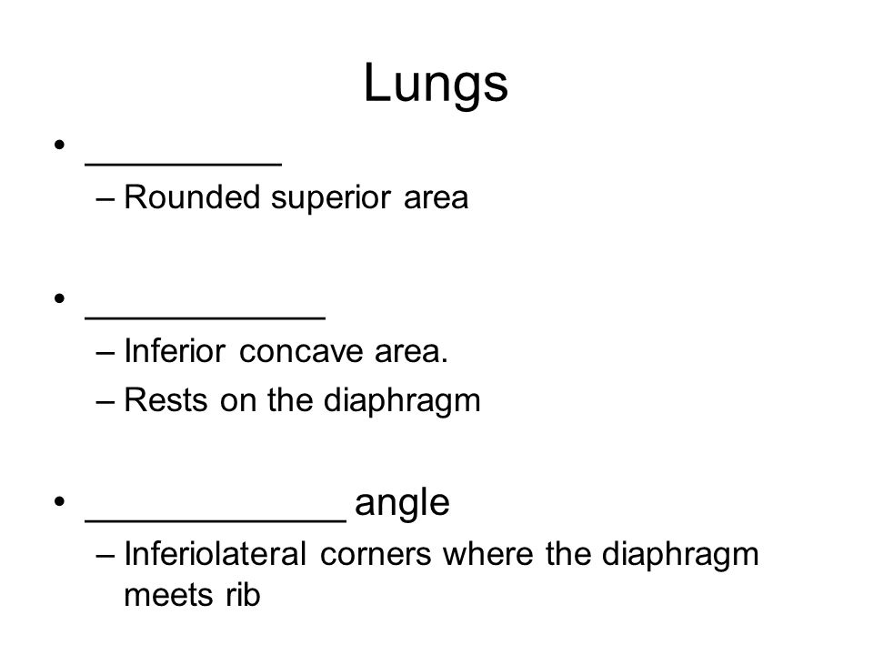 Lungs _________ –Rounded superior area ___________ –Inferior concave area.