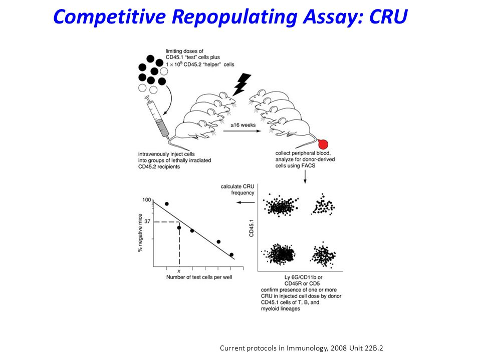 Current protocols in Immunology, 2008 Unit 22B.2 Competitive Repopulating Assay: CRU