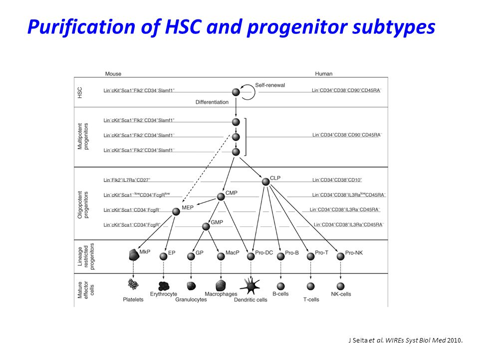 J Seita et al. WIREs Syst Biol Med 2010. Purification of HSC and progenitor subtypes