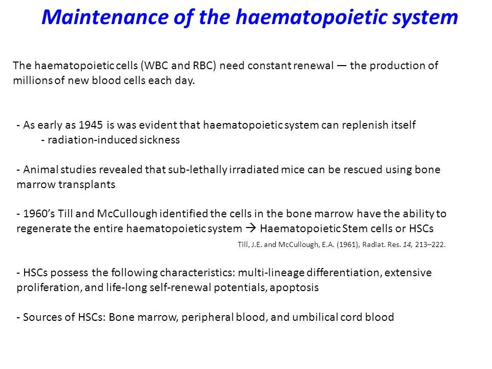 Haematopoiesis generates immune cells Hematopoietic stem cells: 1.