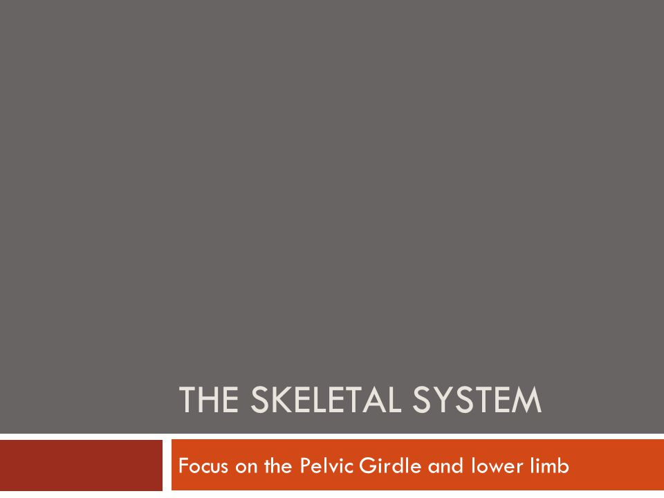 THE SKELETAL SYSTEM Focus on the Pelvic Girdle and lower limb