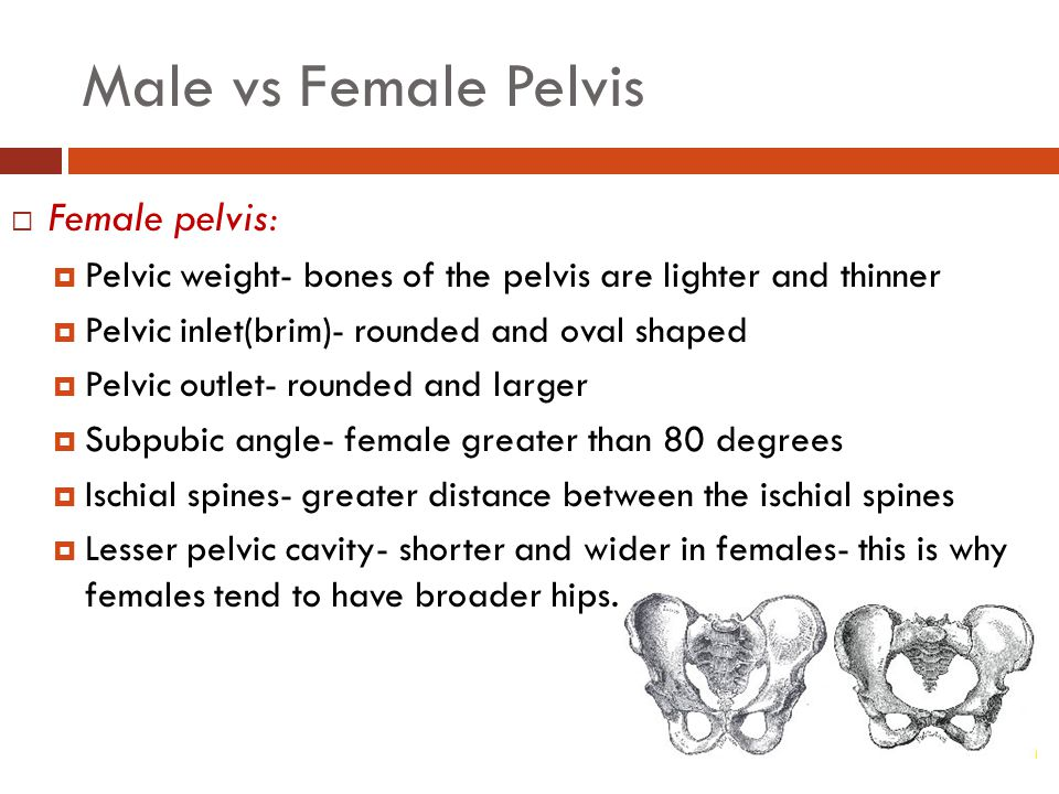Male vs Female Pelvis  Female pelvis:  Pelvic weight- bones of the pelvis are lighter and thinner  Pelvic inlet(brim)- rounded and oval shaped  Pelvic outlet- rounded and larger  Subpubic angle- female greater than 80 degrees  Ischial spines- greater distance between the ischial spines  Lesser pelvic cavity- shorter and wider in females- this is why females tend to have broader hips.