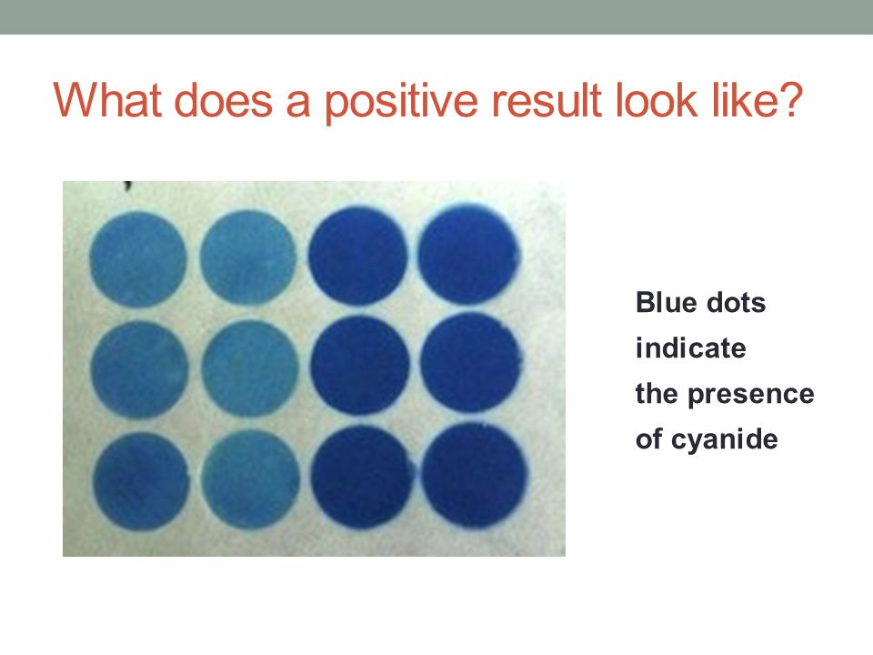 What does a positive result look like? Blue dots indicate the presence of cyanide