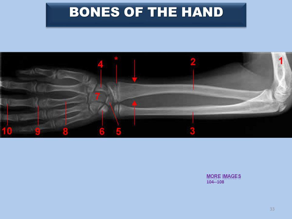 33 BONES OF THE HAND
