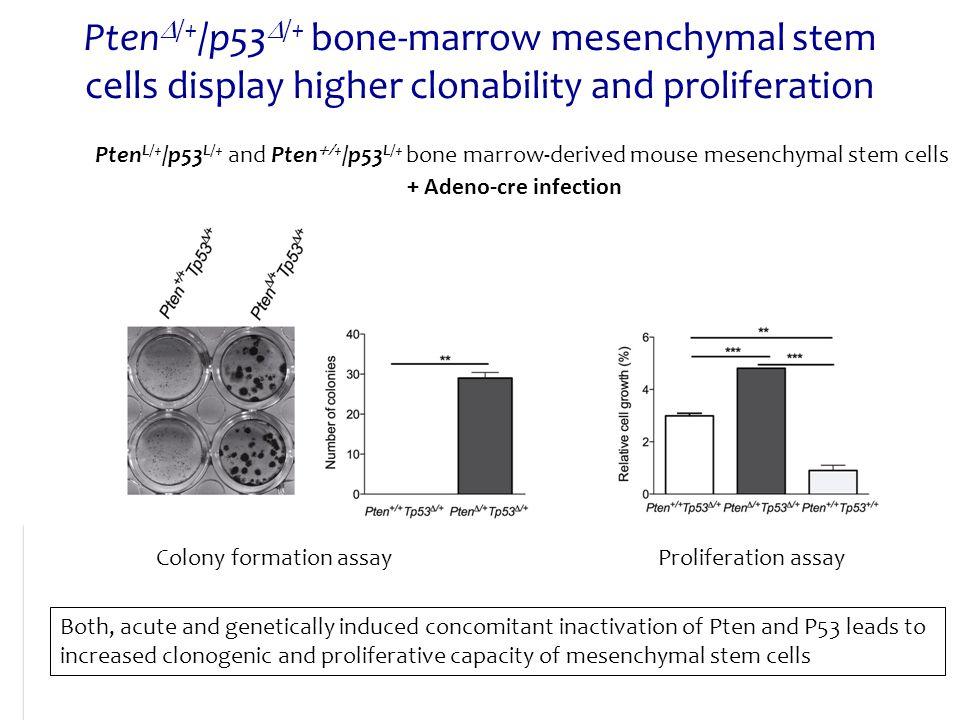Pten  /+ /p53  /+ bone-marrow mesenchymal stem cells display higher clonability and proliferation Pten L/+ /p53 L/+ and Pten  + /p53 L/+ bone marr