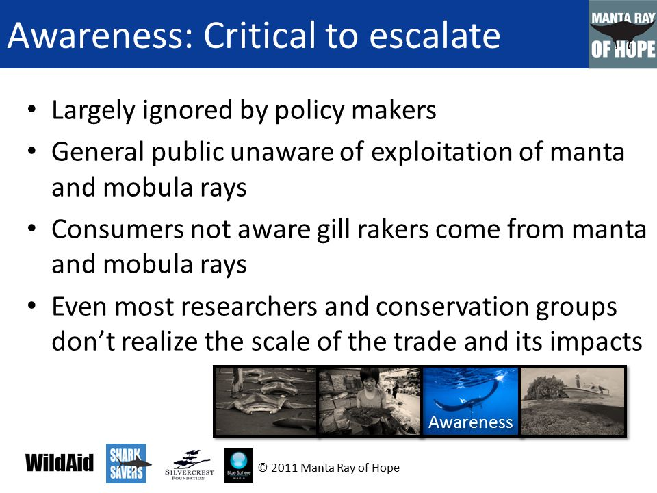 Awareness: Critical to escalate Largely ignored by policy makers General public unaware of exploitation of manta and mobula rays Consumers not aware gill rakers come from manta and mobula rays Even most researchers and conservation groups don't realize the scale of the trade and its impacts Awareness © 2011 Manta Ray of Hope