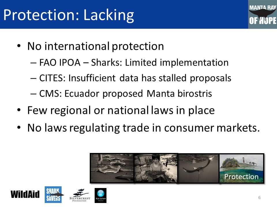 Protection: Lacking No international protection – FAO IPOA – Sharks: Limited implementation – CITES: Insufficient data has stalled proposals – CMS: Ecuador proposed Manta birostris Few regional or national laws in place No laws regulating trade in consumer markets.