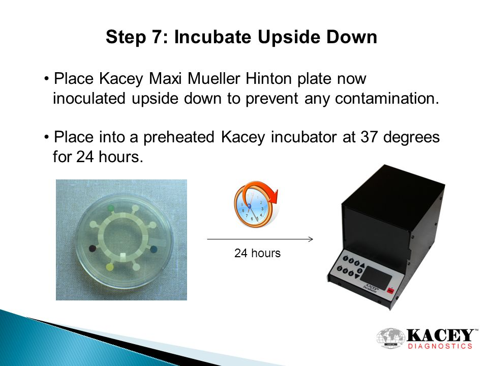 Step 7: Incubate Upside Down Place Kacey Maxi Mueller Hinton plate now inoculated upside down to prevent any contamination.