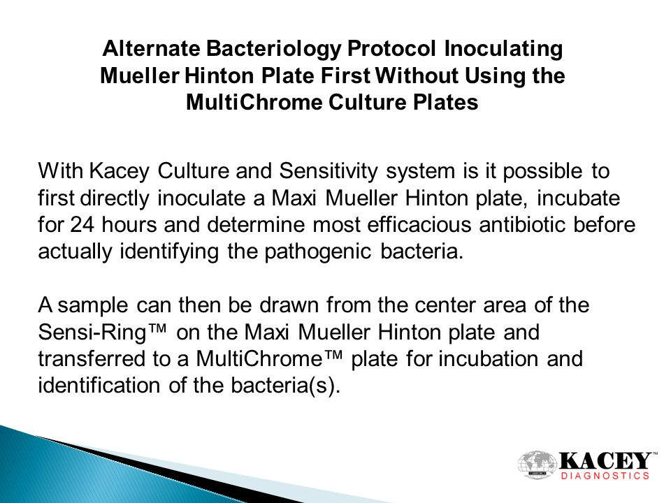 Alternate Bacteriology Protocol Inoculating Mueller Hinton Plate First Without Using the MultiChrome Culture Plates With Kacey Culture and Sensitivity system is it possible to first directly inoculate a Maxi Mueller Hinton plate, incubate for 24 hours and determine most efficacious antibiotic before actually identifying the pathogenic bacteria.