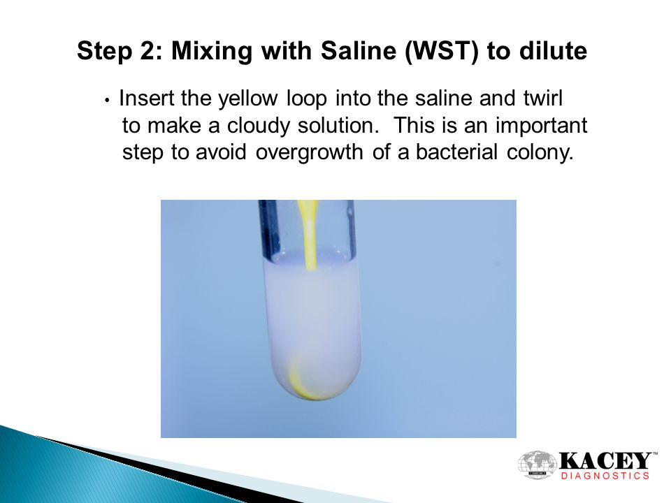 Step 2: Mixing with Saline (WST) to dilute Insert the yellow loop into the saline and twirl to make a cloudy solution.