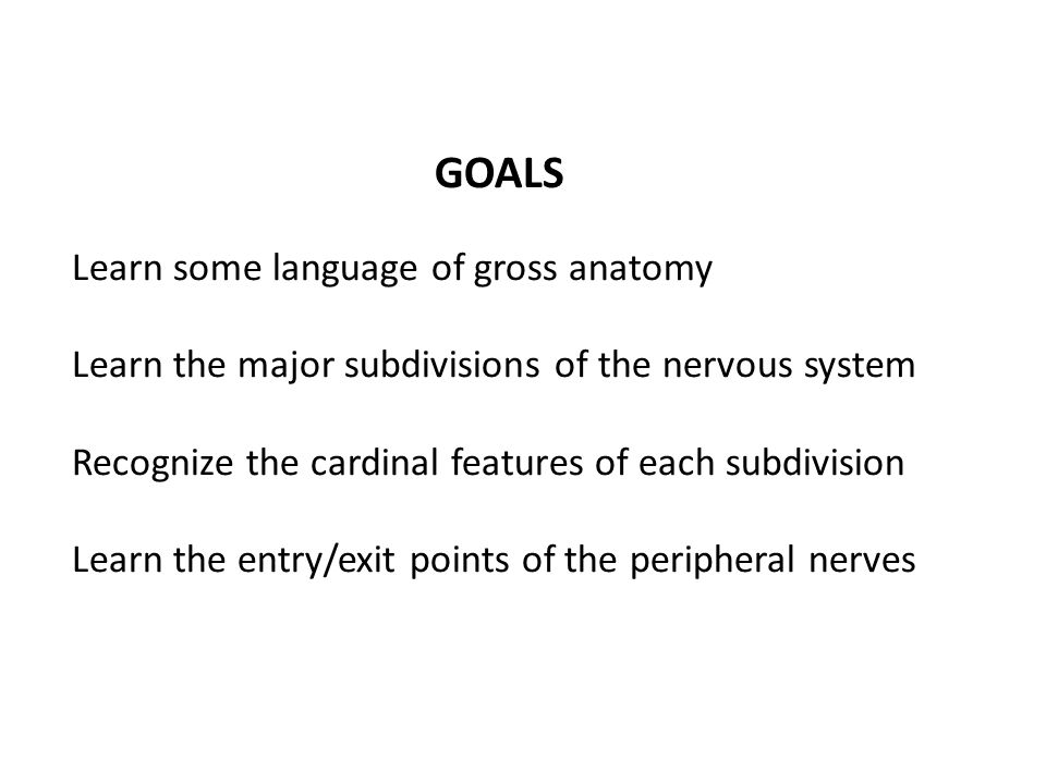 GOALS Learn some language of gross anatomy Learn the major subdivisions of the nervous system Recognize the cardinal features of each subdivision Lear
