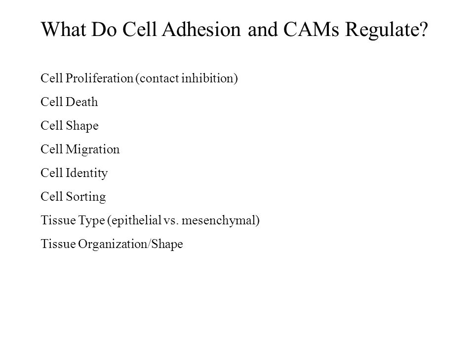 What Do Cell Adhesion and CAMs Regulate? Cell Proliferation (contact inhibition) Cell Death Cell Shape Cell Migration Cell Identity Cell Sorting Tissu