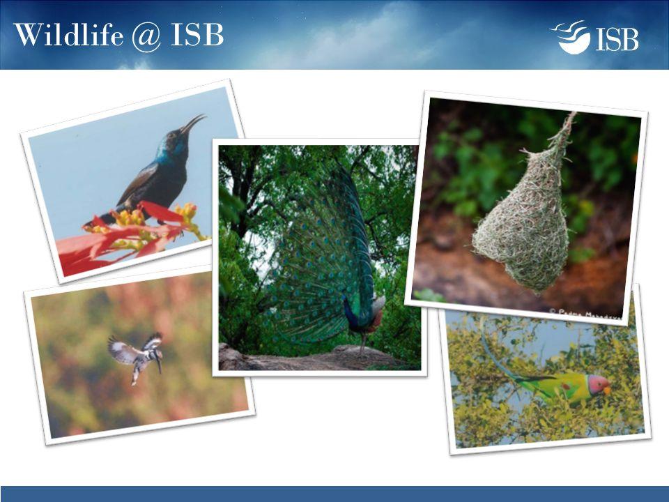 Wildlife @ ISB