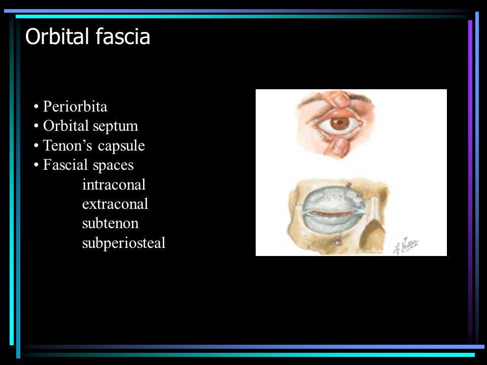 Orbital fascia Periorbita Orbital septum Tenon's capsule Fascial spaces intraconal extraconal subtenon subperiosteal