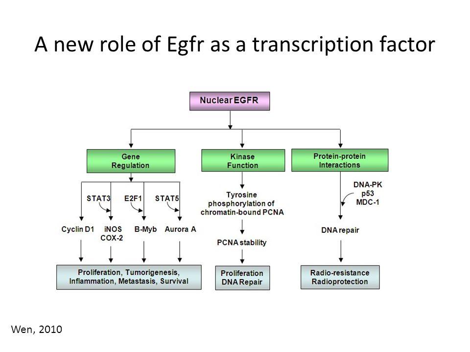 A new role of Egfr as a transcription factor Wen, 2010