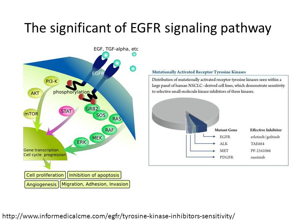 The significant of EGFR signaling pathway http://www.informedicalcme.com/egfr/tyrosine-kinase-inhibitors-sensitivity/