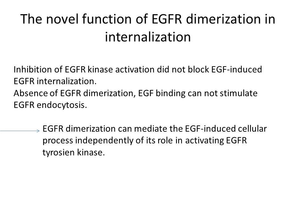 The novel function of EGFR dimerization in internalization Inhibition of EGFR kinase activation did not block EGF-induced EGFR internalization.
