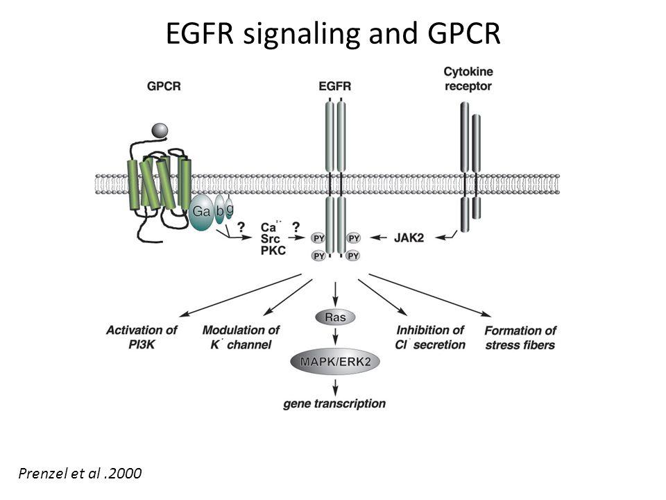 EGFR signaling and GPCR Prenzel et al.2000