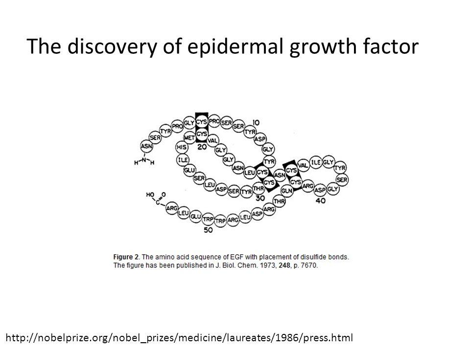 Negative regulator of EGFR signaling Bogdan et al. 2000