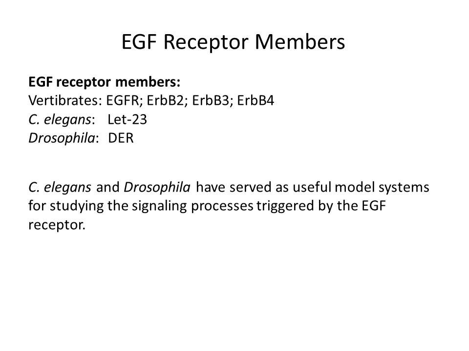 Lipid rafts and EGFR methyl-B-cyclodextrin cholesterol depletion inhibition of EGF-stimulated PI turnover.