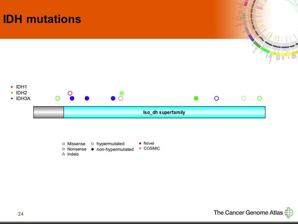24 IDH mutations