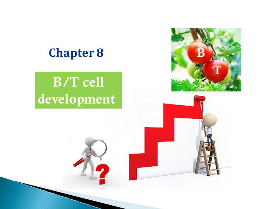 Chapter 8 B/T cell development B T