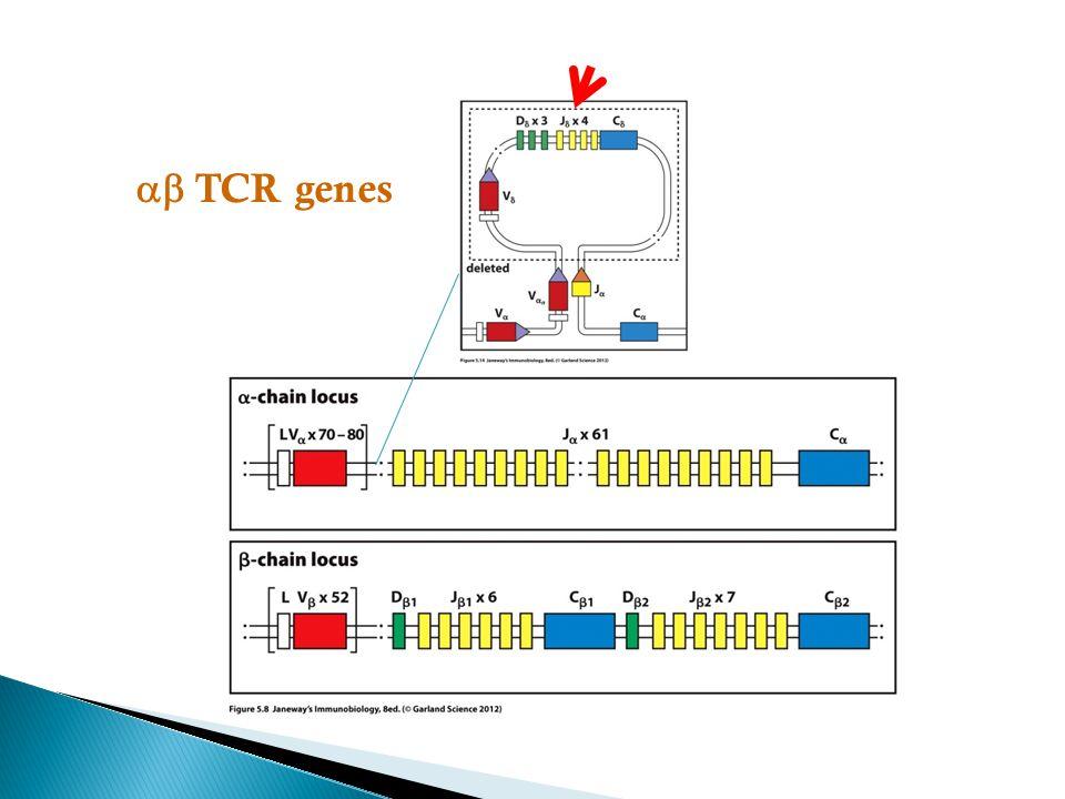  TCR genes
