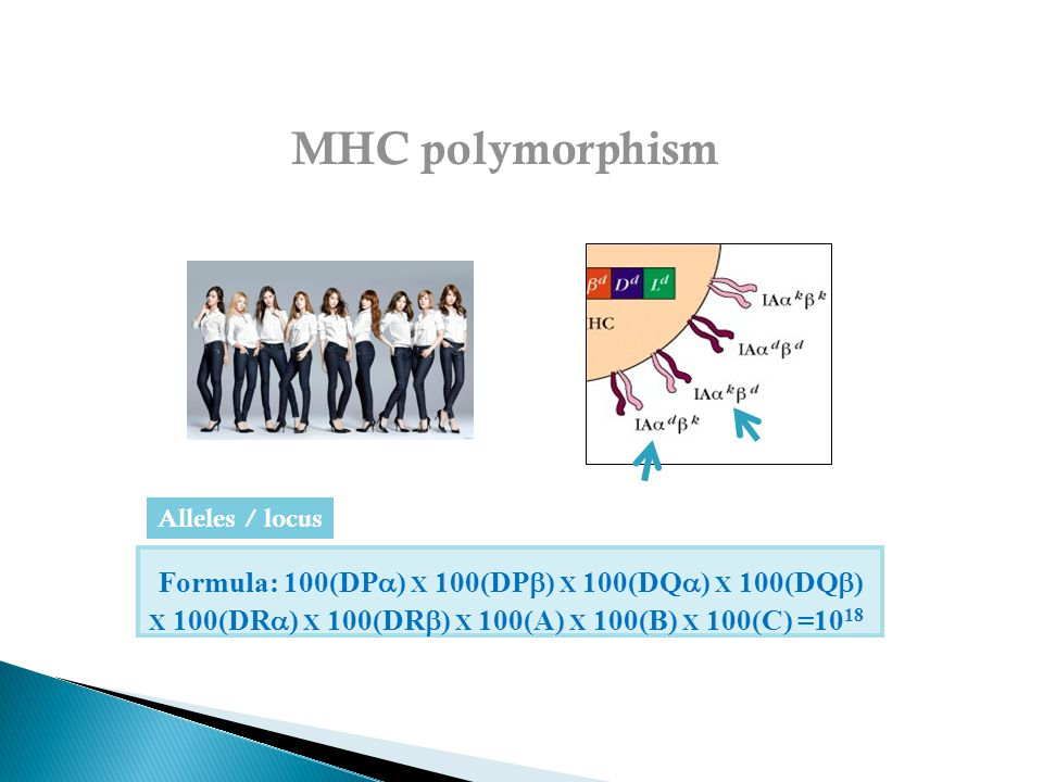 Formula: 100(DP  ) X 100(DP  ) X 100(DQ  ) X 100(DQ  ) X 100(DR  ) X 100(DR  ) X 100(A) X 100(B) X 100(C) =10 18 Alleles / locus MHC polymorphism