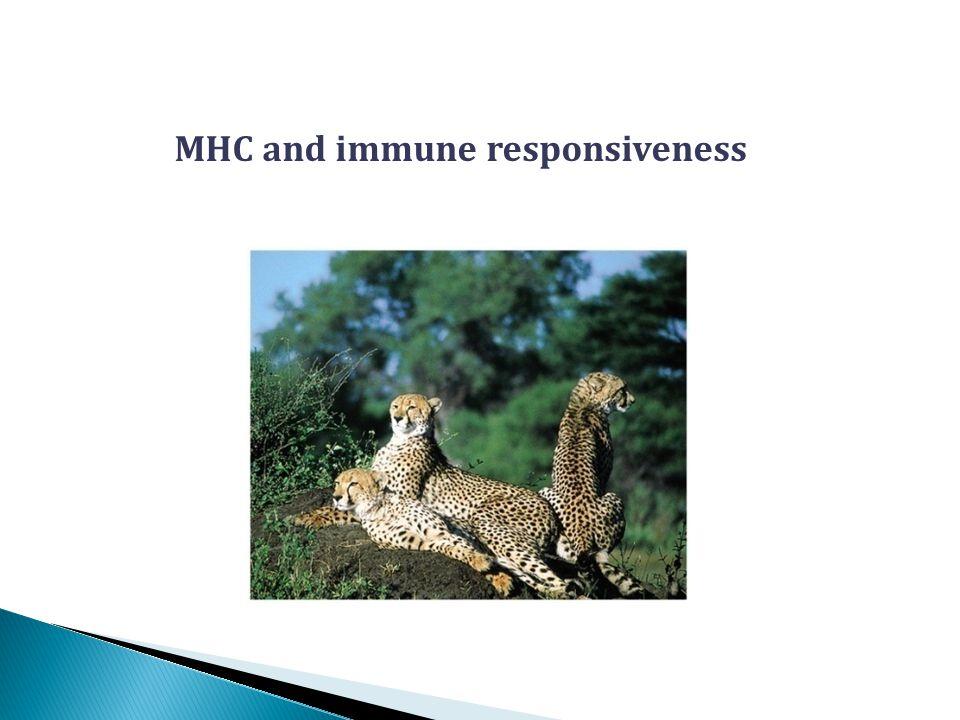 MHC and immune responsiveness