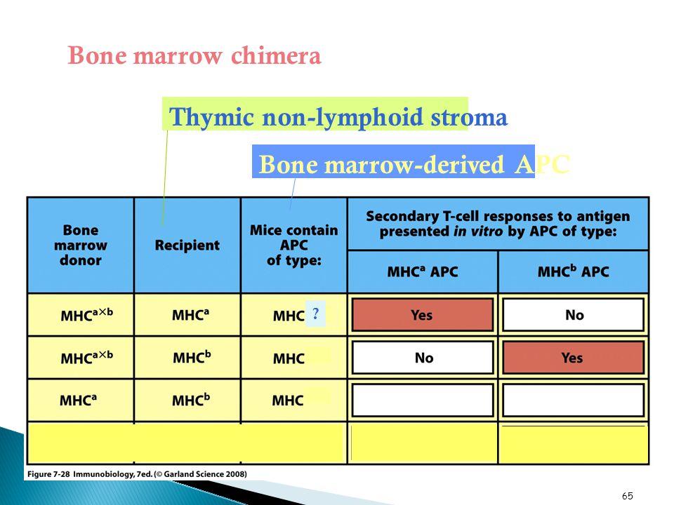 Bone marrow-derived APC Thymic non-lymphoid stroma Bone marrow chimera 65