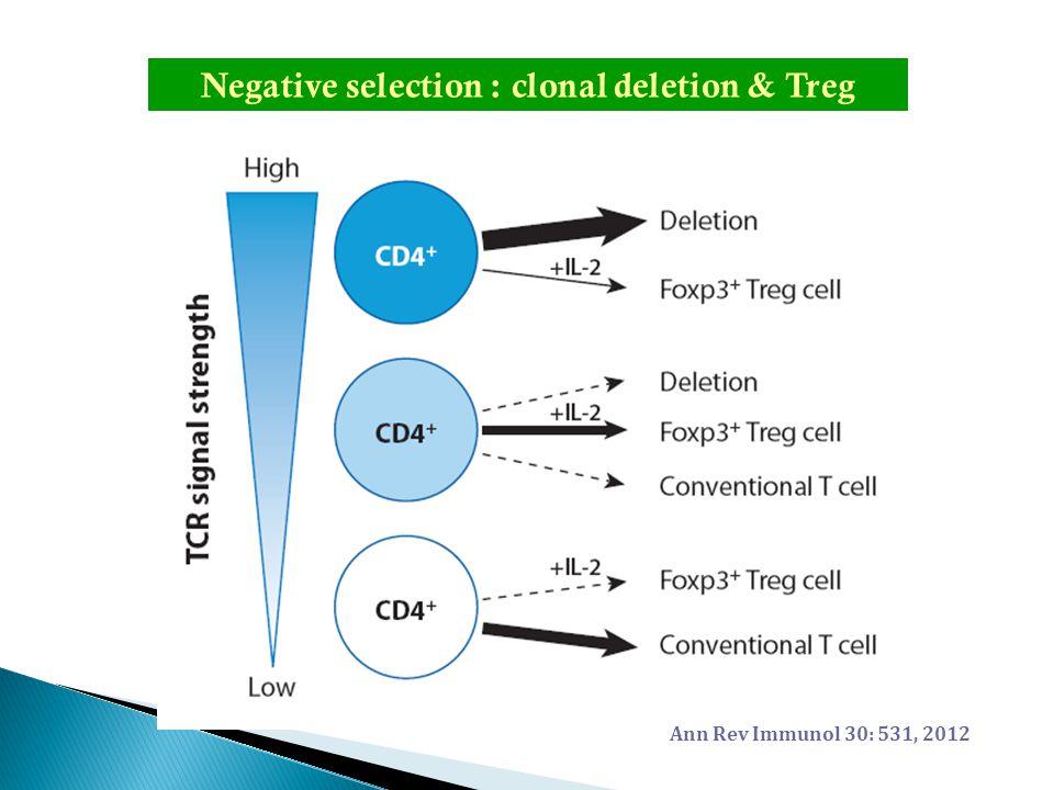 Negative selection : clonal deletion & Treg Ann Rev Immunol 30: 531, 2012