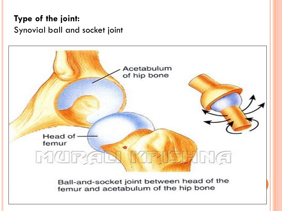 Type of the joint: Synovial ball and socket joint