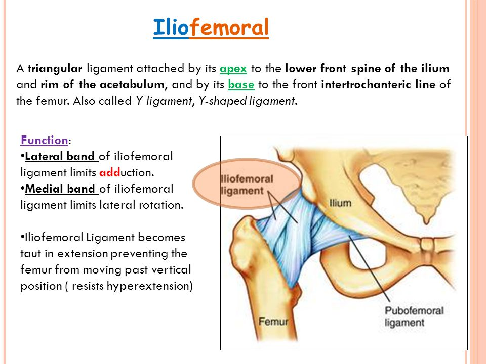 Iliofemoral A triangular ligament attached by its apex to the lower front spine of the ilium and rim of the acetabulum, and by its base to the front i